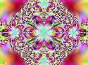 Izoux - Floraison - 2442 ème avec 36 clicks