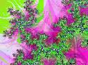 Rob - Rosae - 1505 ème avec 129 clicks - Fractal Explorer