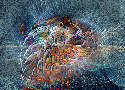 Smörg - No comment - 1289 ème avec 125 clicks